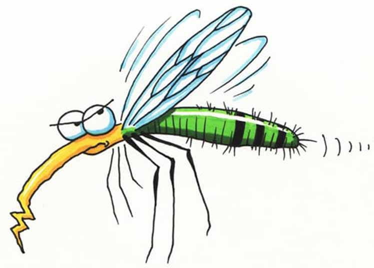 It's Dengue FeverSeason
